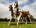 Horses with Carriage Royalty Free Stock Photo