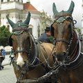Horses in the city Royalty Free Stock Images