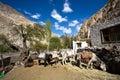 Horses in the compund of Home Stay at Markh, Markha Trek, Markha Valley, Ladakh, India Royalty Free Stock Photo