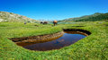 Horses on Corsica Island  Stock Photography