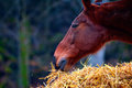 Horses eating from a hay bale Royalty Free Stock Photography