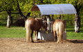 Horses at feeder Stock Images