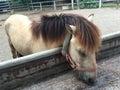 Horses feeding at the trough Royalty Free Stock Photo