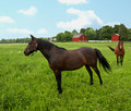 Horses in field Royalty Free Stock Photo
