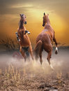 Horses fight at sunset Royalty Free Stock Photo