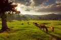 Horses in forest at sunset under cloudy sky. Royalty Free Stock Photo