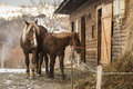 Horses in front of there house in winter time Royalty Free Stock Photos