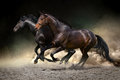 Horses gallop in desert two horse run dust Stock Photo