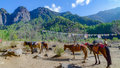 Horses and grass landscape with the green mountains,Bhutan Royalty Free Stock Photo