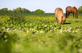 Horses grazing on a endless meadow Royalty Free Stock Image