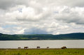 Horses grazing by mountain lake chapala mexico with mt garcia in background Stock Photos