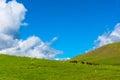 Horses grazing on a mountain pasture, Kyrgyzstan. Royalty Free Stock Photo