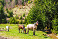 Horses grazing near a mountain river Royalty Free Stock Photo