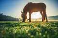 Horses grazing on pasture at misty sunrise Royalty Free Stock Photo