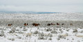 Horses grazing in a winter day arizona Stock Photo