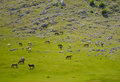 Horses on green meadow many beautiful in the mountains Stock Photography