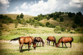 Title: Horses on green rural land