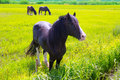 Horses in green yellow spring meadow Stock Photography