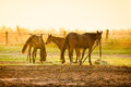 Horses in haras on morning light Royalty Free Stock Photo