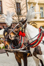 Horses in harness the main square of the old town krakow poland Stock Image