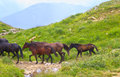 Horses herd running on green valley in mountains with water stream Stock Photo