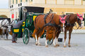 Horses for hire in Vienna Stock Images