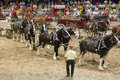 Horses hitches. Royalty Free Stock Photo