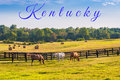 Horses at horse farm. Country summer landscape Royalty Free Stock Photo