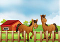 Horses Inside The Wooden Fence...