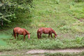 Horses in a Jungle Field Royalty Free Stock Images