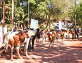Horses in Matheran , India Royalty Free Stock Photos