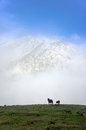 Horses on misty mountains with beautiful light Royalty Free Stock Photo