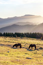 Horses in the mountain with haze at morning urkiola basque country spain Royalty Free Stock Photos