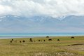 Horses at the mountain lake song kul tien shan kyrgyzstan Royalty Free Stock Photos