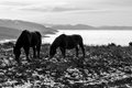 Horses over a sea of fog Royalty Free Stock Photo