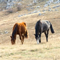 Horses on pasture Stock Photo