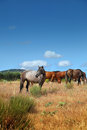 Horses in the pasture group of grazing field Stock Photo