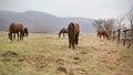 Horses on pastures few grazing Stock Photos