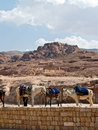 Horses in Petra Royalty Free Stock Photos