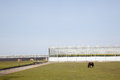 Horses and pony grazing in front of greenhouses westland near den haag holland Stock Images