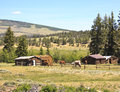 Horses in ranch corral grazing a post and rail on an historic american colorado with authentic log cabins and barns against a Royalty Free Stock Photos