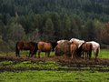 Horses in reservation wild living a Stock Photo