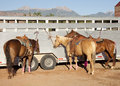 Horses at rodeo Royalty Free Stock Image