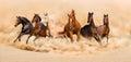 Horses run Royalty Free Stock Photo
