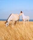 Horses at seashore Royalty Free Stock Photo