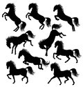 Horses silhouettes set of a moving horse isolated on white Stock Photos