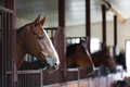 Horses in the stable head of horse looking over doors on background of other Stock Photo