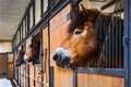 Horses in stable three curious brown looking out of window a typical farm Royalty Free Stock Photos