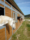 Horses in stall Stock Image