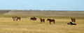 Horses at steppe